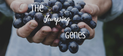 The Jumping Genes