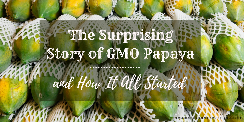GMO Papaya success in Hawaii