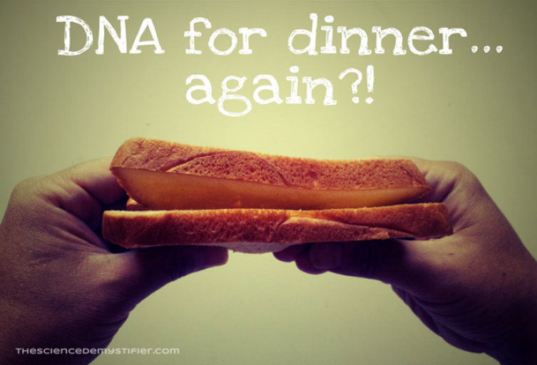 DNA in food: DNA in a sandwich