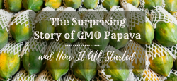 The Surprising Story of GMO Papaya