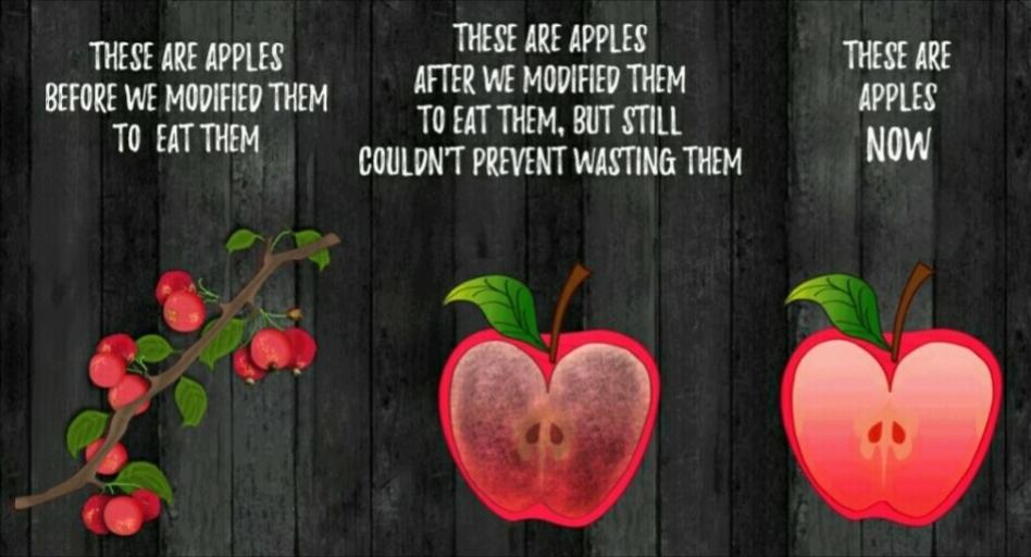 GMOapples